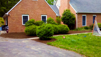 Lawn Care Maintenance Services